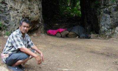 Famous Krabi elephant dies near elephant camp | The Thaiger
