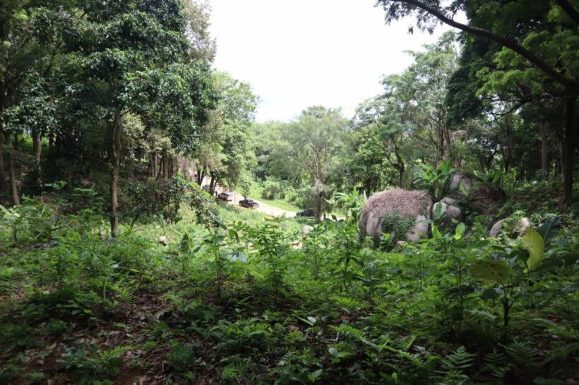 กรมป่าไม้ ลงพื้นที่สั่งรื้อถอนสิ่งปลูกสร้างที่ดินหาดนุ้ย ภูเก็ต | News by The Thaiger