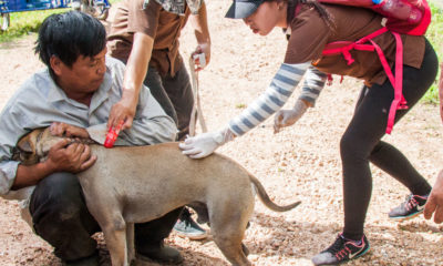 Thailand's first Rabies death for the year | The Thaiger