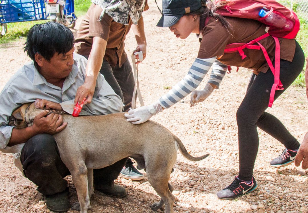 Thailand's first Rabies death for the year | Thaiger