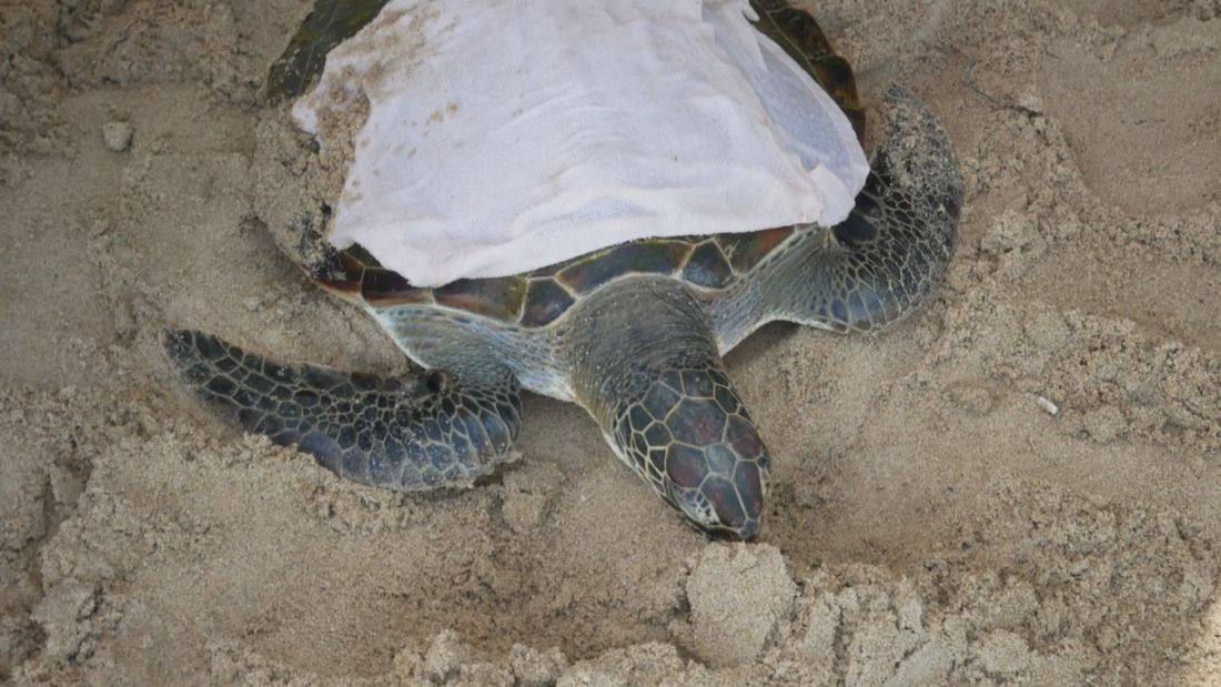 Sea turtle rescued on Kamala beach   News by Thaiger