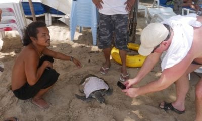 Sea turtle rescued on Kamala beach | The Thaiger