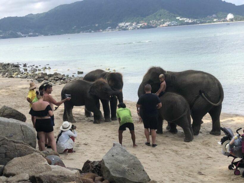 สบทช.9 ลงตรวจสอบ หลังโซเชี่ยลวิจารณ์คลิปนำช้างลงเล่นน้ำ ถ่ายภาพกับนทท.หน้าหาดไตรตรัง | News by The Thaiger