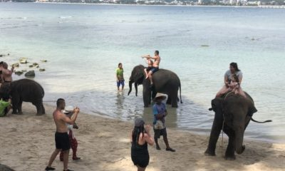 Officials investigate complaints of elephants on Phuket beach | The Thaiger