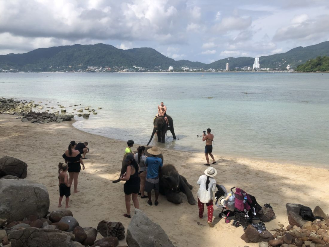 Officials investigate complaints of elephants on Phuket beach | News by The Thaiger