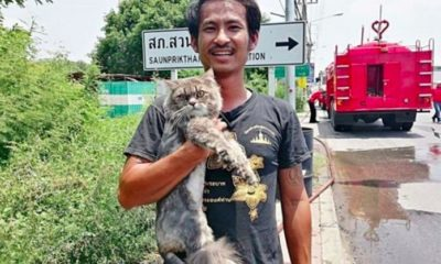 หนุ่มขับรถพ่วงหนีตาย ไฟไหม้ท่วมรถ คว้า 'เจ้าสิบล้อ' แมวสุดรักรอดทั้งคู่ | The Thaiger