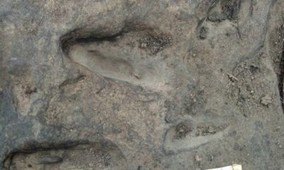 Dinosaur footprints found in north-eastern national park | The Thaiger