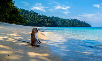 Expat life in Thailand – a balancing act | The Thaiger