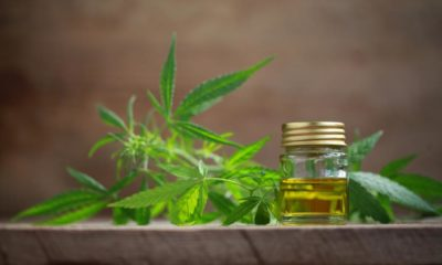 Businesses rush in to capitalise on medical marijuana mania   The Thaiger