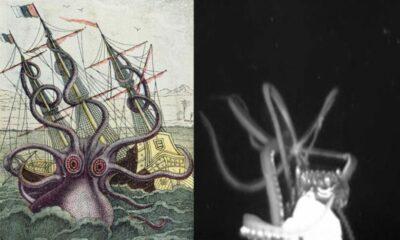 คลิปหาดูยาก หมึกยักษ์ตัวเป็นพุ่งใส่เรือสำรวจ ตำนาน Kraken ที่มีชีวิต | The Thaiger