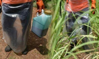 กระทรวงเกษตร ของบ 98 ล้านบาท อบรมใช้สารเคมีอันตราย 'พาราควอต-ไกลโฟเซต-คลอร์ไพริฟอส' | The Thaiger