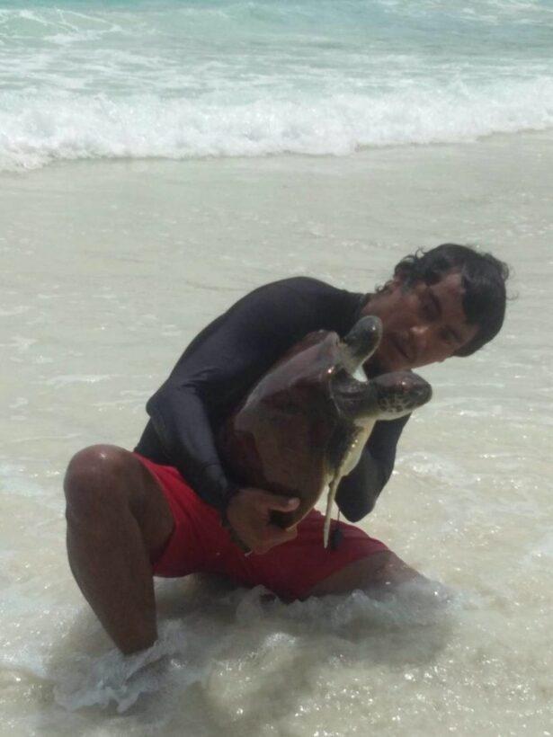 พบเต่าทะเลติดอยู่ภายในซากอวน หลังพายุพัดเกยตื้น อ่าวปะตก เกาะราชาใหญ่ | News by The Thaiger