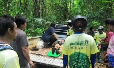 Runners run into a herd of Thai wild elephants, two injured | The Thaiger