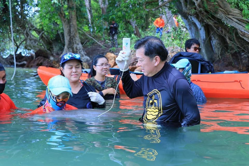 Little Marium growing up in a Dugong Thai nursery | News by The Thaiger