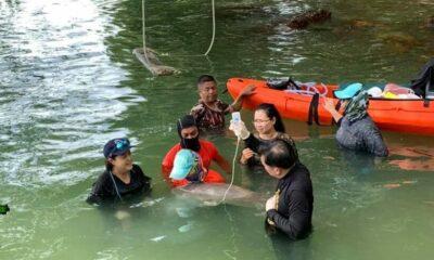 Little Marium growing up in a Dugong Thai nursery | Thaiger