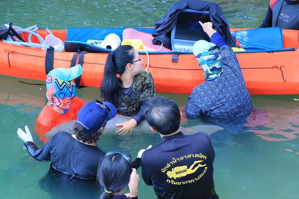 Baby dugong 'Marium' being cared for in Trang   News by Thaiger