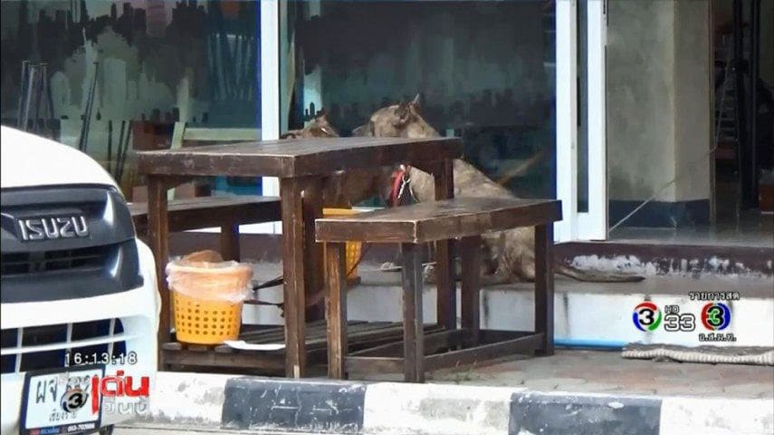 Dog viciously attacks child in Chiang Mai – owner offers 3,000 baht compensation