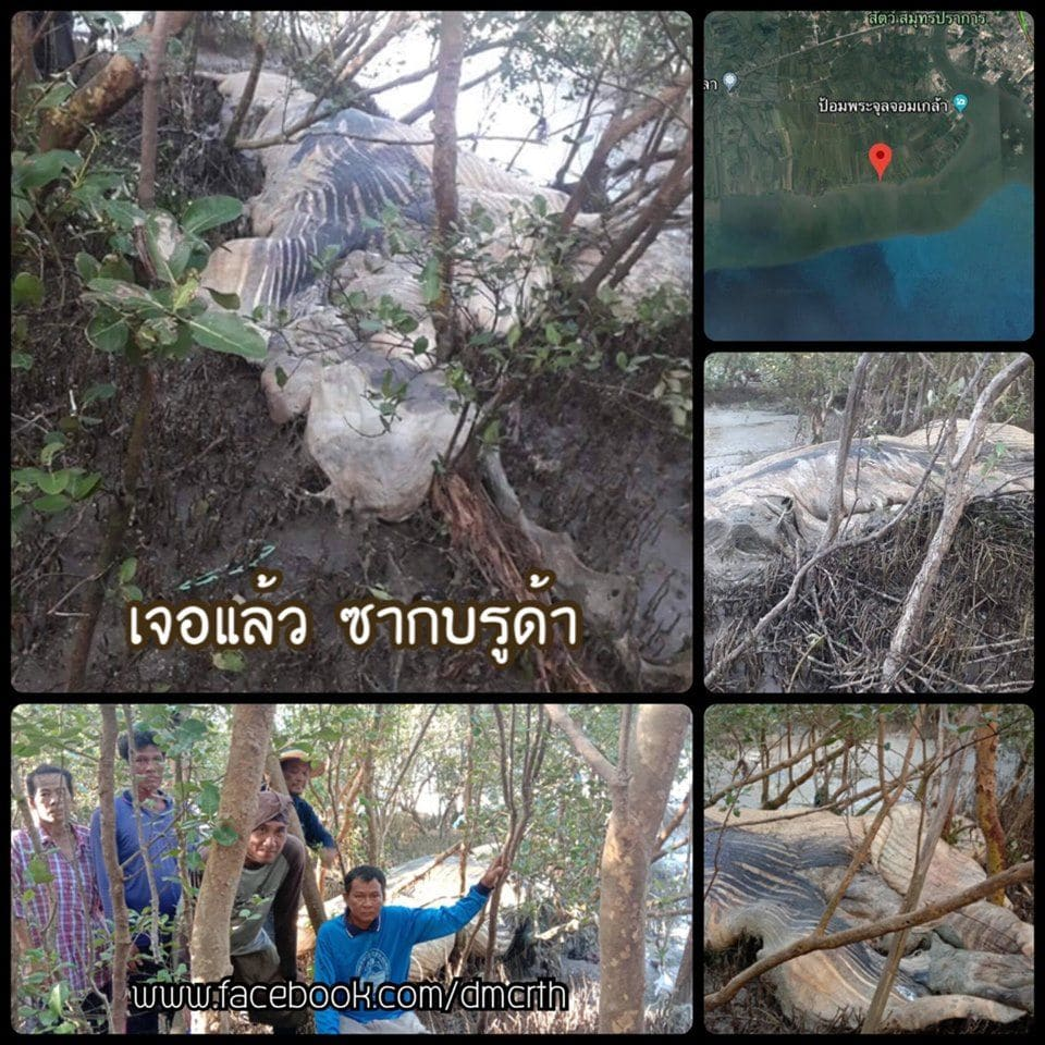 Bryde's whale carcass washed up on Samut Prakan beach   News by Thaiger