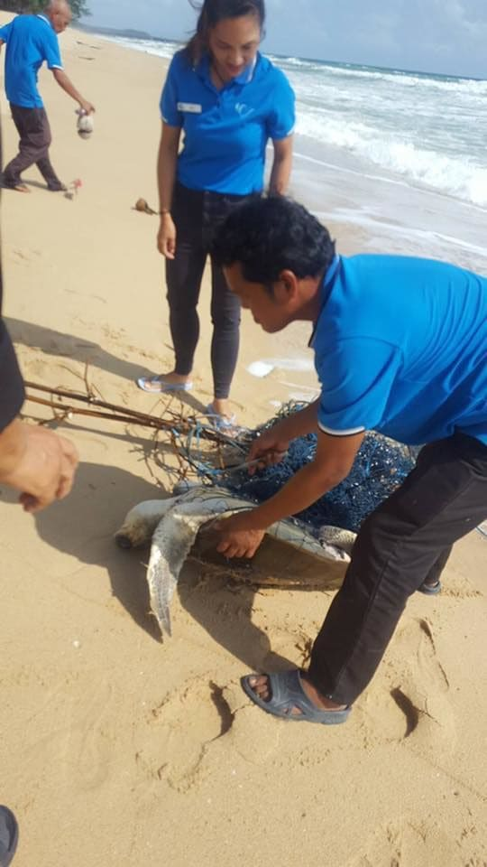 Injured sea turtle rescued from fishing net in Phang Nga | News by Thaiger