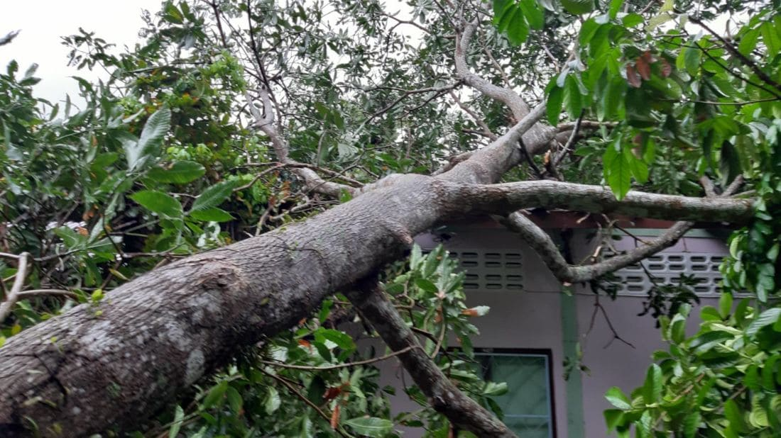 Trees damage cars and a house in Phuket | News by Thaiger