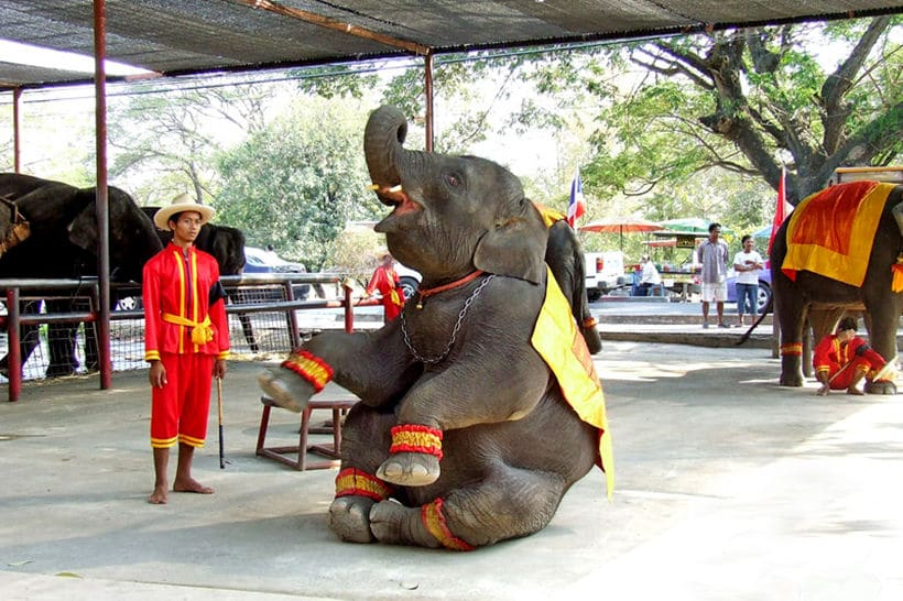 Ayutthaya Elephant Palace to be relocated for park make-over | News by Thaiger