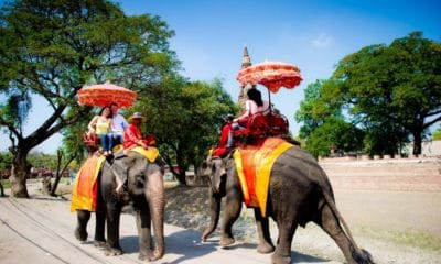 Ayutthaya Elephant Palace to be relocated for park make-over | The Thaiger