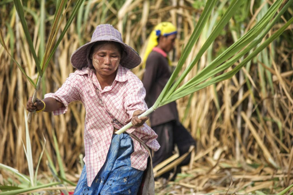 ASEAN meeting reports on global sugar deficit and opportunities for SE Asian countries