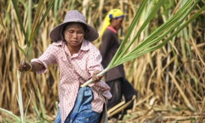 ASEAN meeting reports on global sugar deficit and opportunities for SE Asian countries | The Thaiger
