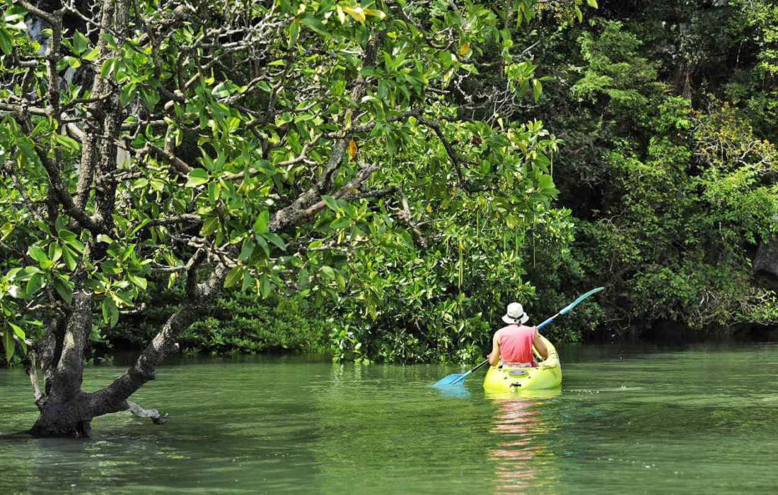 83 year old goes missing during Phang Nga mangrove expedition | The Thaiger