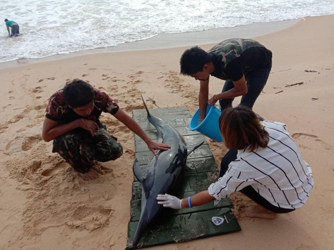 Injured dolphin rescued off Phang Nga | News by The Thaiger