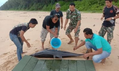 Injured dolphin rescued off Phang Nga | Thaiger