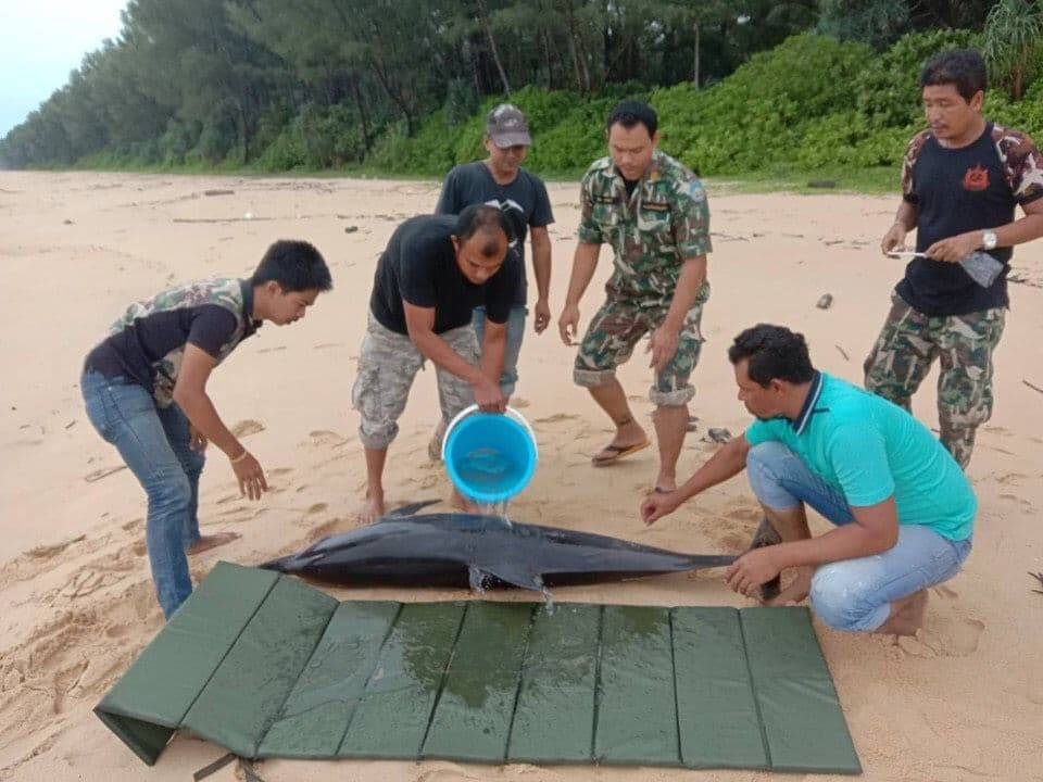 Injured dolphin rescued off Phang Nga | The Thaiger