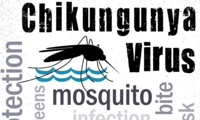 Health warning: Chikungunya cases up in Thailand's southern province | The Thaiger