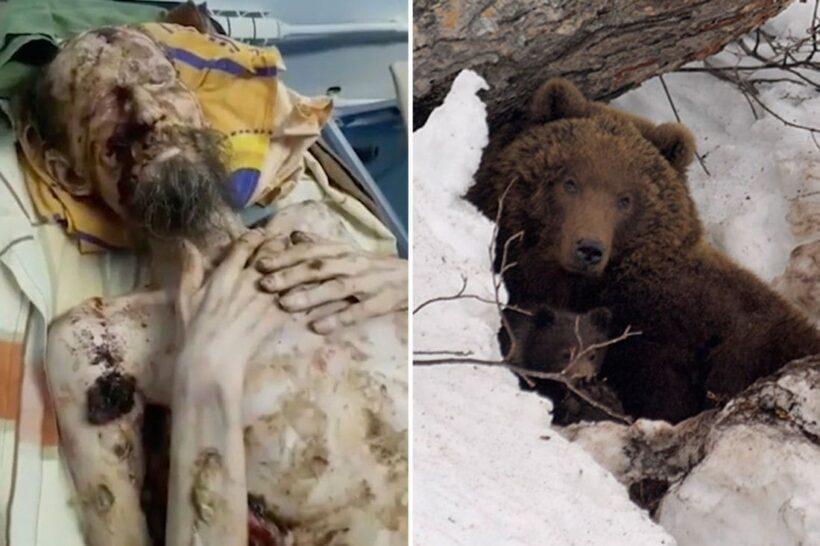 รอดตายปาฏิหาริย์ ชายรัสเซียตัวผอมเหลือแต่ซี่โครง หลังถูกหมีลากเข้าถ้ำนาน 1 เดือน | The Thaiger