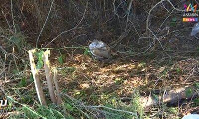 พบรักออนไลน์ หนุ่มฆ่าสาวหมกป่า ศพมีแผลข่วนทั่วตัว | The Thaiger
