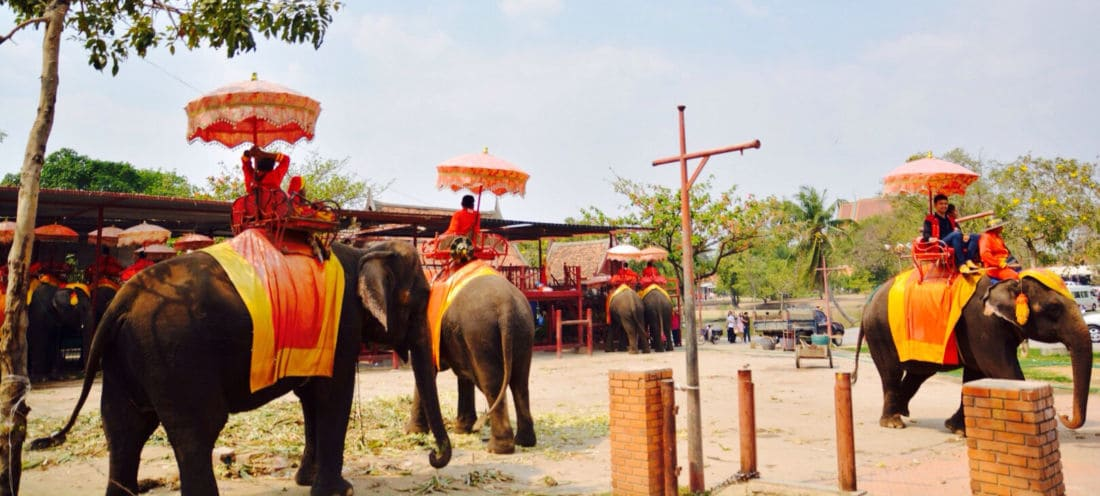 Thailand's Ayutthaya Elephant Palace says they will fight eviction orders   News by Thaiger