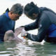 Visiting time to see baby dugong Mariam is now restricted | The Thaiger