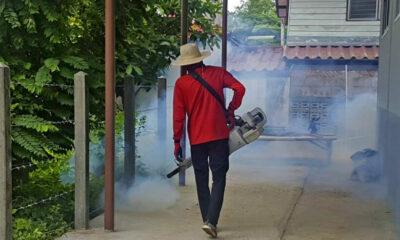 Si Sa Ket province declares dengue emergency | The Thaiger