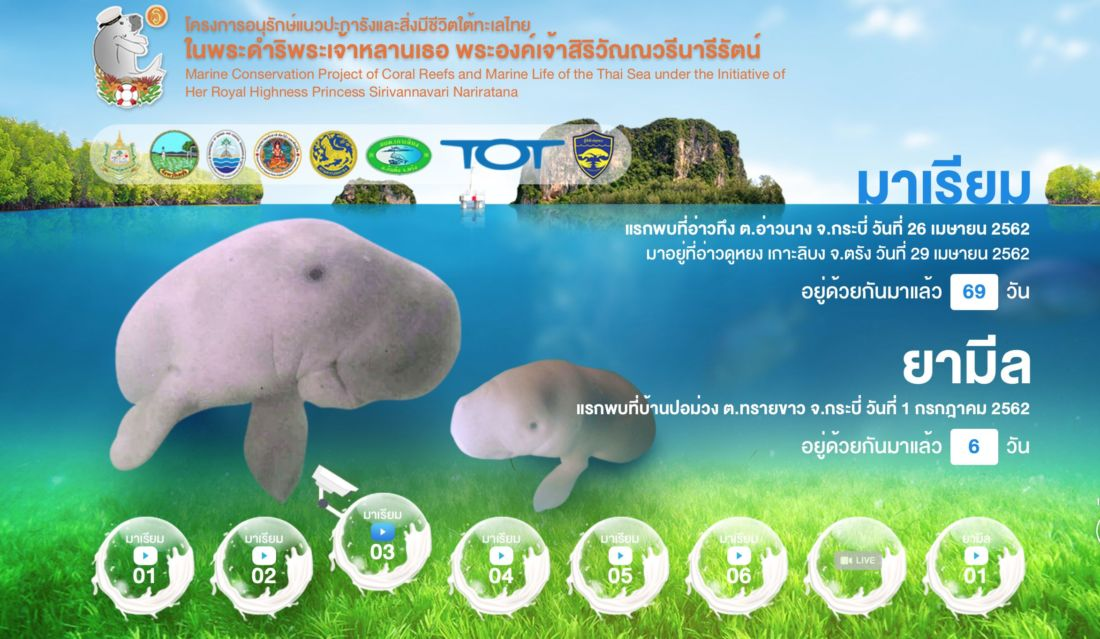 Dugongs 'live' from today starring Miriam and Yamil | News by Thaiger