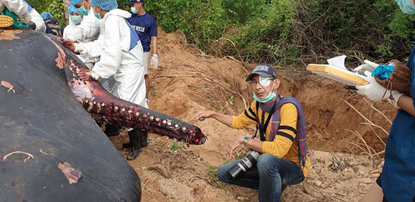Sperm Whale found on Krabi beach had digested plastic bottles | News by Thaiger