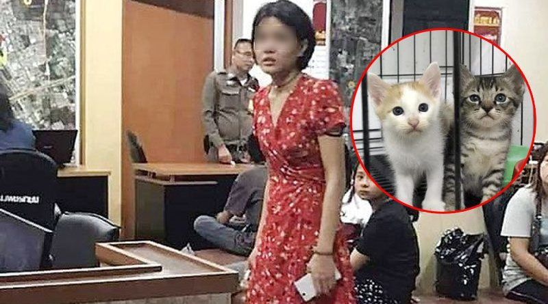 Thai DJ rounds up stray cats then films killing them for payment | News by Thaiger
