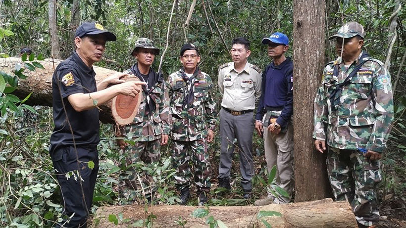 Illegal forest poachers resorting to landmines to scare off rangers in Thailand's east | The Thaiger