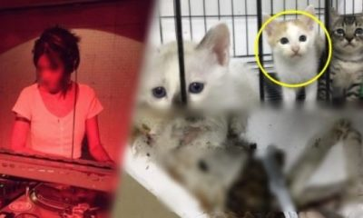Thai DJ rounds up stray cats then films killing them for payment | The Thaiger