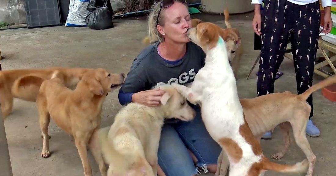 Songkhla soi dogs heading to the US | News by Thaiger