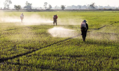 Three herbicides will be banned in Thailand this year | The Thaiger