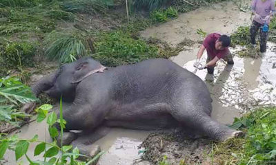 7 year old elephant dies after being hit by truck   Thaiger