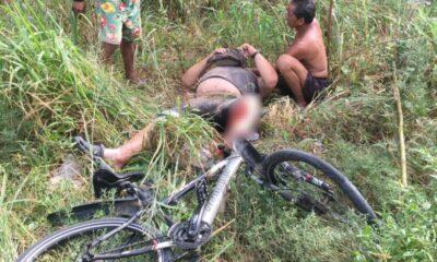 Elephant gores German cyclist near Pattaya   The Thaiger