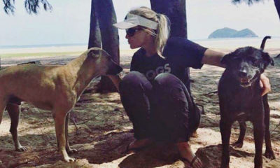 Songkhla soi dogs heading to the US   The Thaiger
