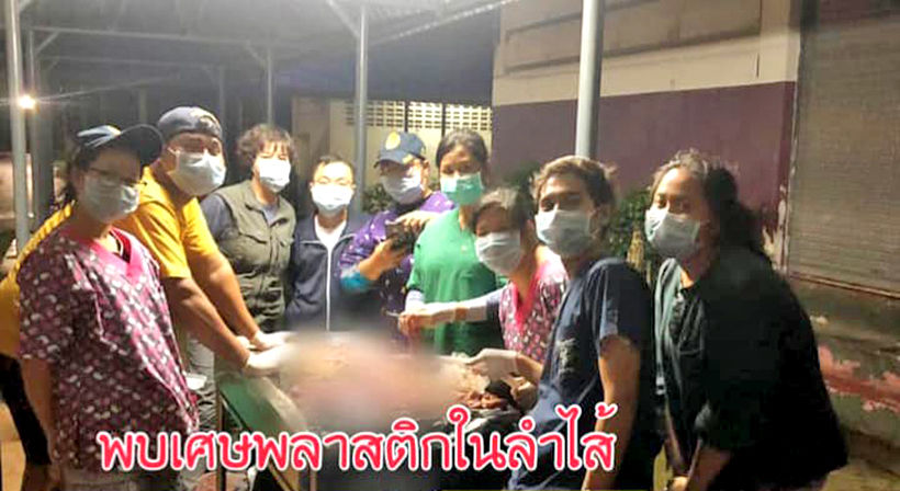 Mariam the young Krabi dugong dies | Thaiger