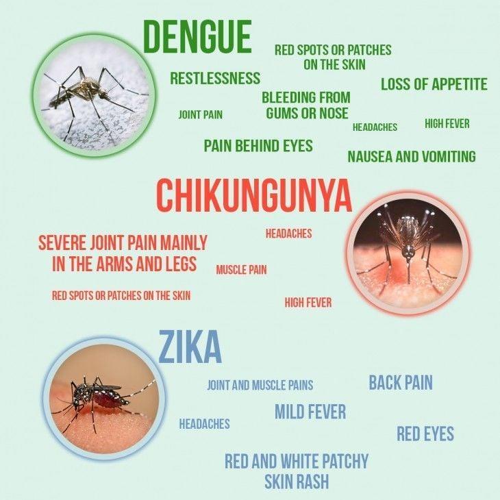 Chikungunya virus mutates -